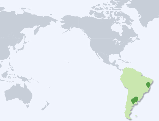 South America Branch map image